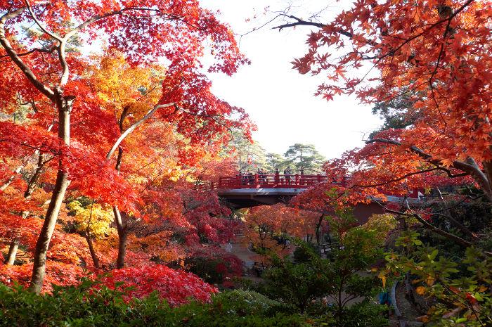 弥彦 神社 紅葉